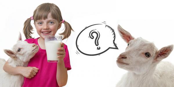 Скільки молока дає коза за добу ?