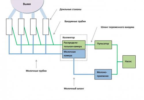 Особливості будови доїльного апарату для кіз